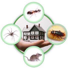 Уничтожение тараканов клопов блох мышей крыс